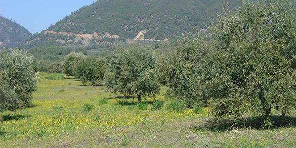 Agricultură organică