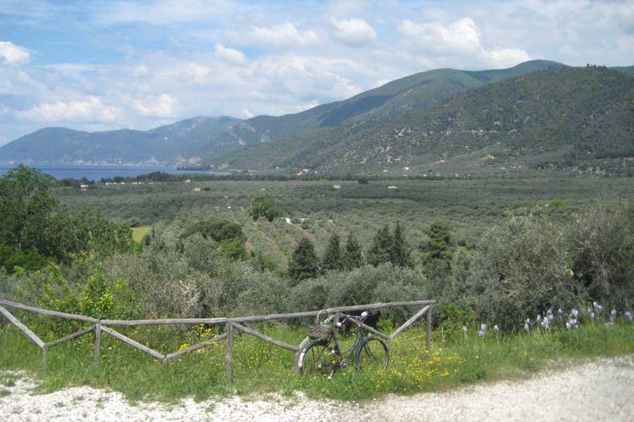 view to the olive grove
