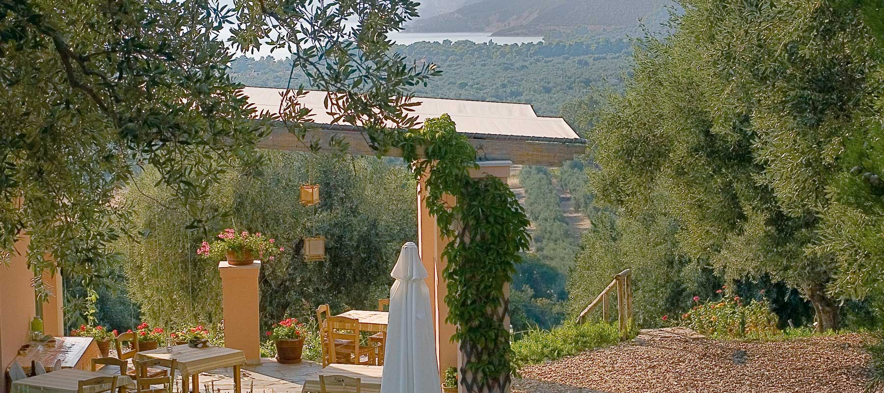 Enjoy a drink under the olives trees or in a cosy atrium